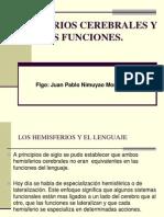 4.1 Hemisferio Cerebrales y Sus Funciones.