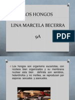 HONGOS 1