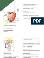 Tentir Kuliah Fisiologi Uropoetik