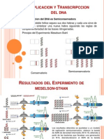 Replicacion y Transcripcion Del Dna
