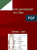 Tratamento periodontal em cães