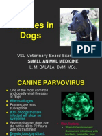 Diseases in dogs.ppt