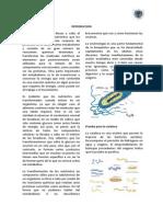 Informe de Micro (Metabolismo Bacteriano)