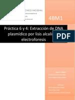 Prácticas 6 y 4 lisis alcalina y electroforésis compl