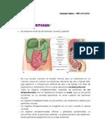 5. Cavidaad Peritoneal