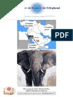 L'année de l'éléphant