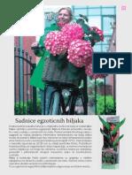 katalog biljke prolece 2010