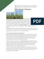Culturile de Plante Energetice