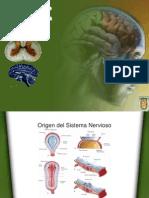 desarrollo embrionario de sistema nervioso
