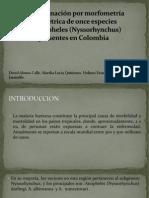 Discriminación por morfometría geométrica de once especies.pptx