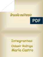 brucella-090709150558-phpapp01