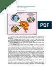 Sistema Límbico. El centro de las emociones..pdf