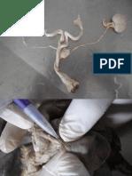 3 - Anatomia Veterinária - Aparelho Urinário.pdf