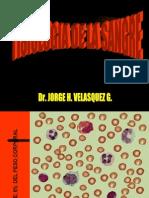 Clase Hemato 1 - Hematopoyesis
