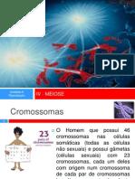 4_meiose