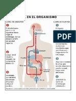 El Alcohol en El Organismo