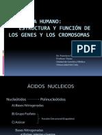 El Genoma Humano Ppt
