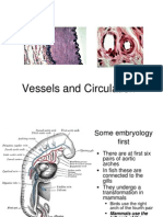 Lecture 19 - Vessels and Circulation