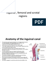 Inguinal and Femoral Region