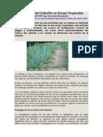 El Cultivo del Cebollín en Zonas Tropicales