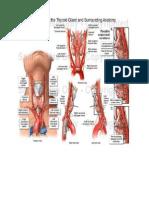 Anatomy Thyroid