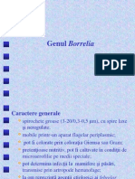 Curs 11 Borellia Chlamydia
