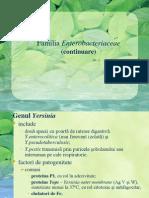 Enterobacteriaceae (Continuare)