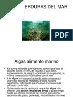 Algas Verduras Del Mar Completo Actualizado