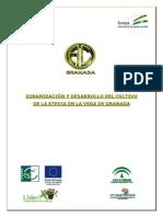 Proyecto Dinamizacion y Desarrollo Stevia Granada