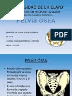 Pelvis Osea Dispositivas (1)[1]
