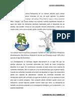 HIDROPONÍA--proyecto-wesly