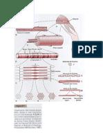 Modulo III Muscular