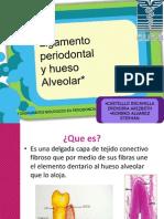 1.3 Ligamento Periodontal y 1.4 Hueso Alveolar