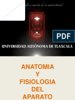 ANATOMÍA Y FISIOLOGÍA DEL APARATO DIGESTIVO 3D.ppt