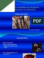 9_Plagas_frijol1.pdf