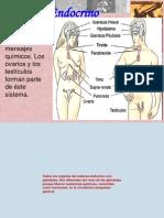 5°Sistema Endocrino-2012