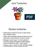 Anatomi Tumbuhan.ppt