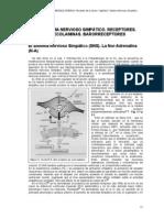 C03 Sistema Nervioso Simpatico