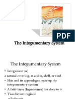 The Integumentary System.ppt