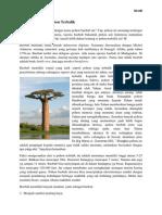 Pohon Baobab Artikel