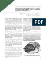 6_Valeanu.pdf