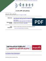 Paper 2-p53 ARF.pdf