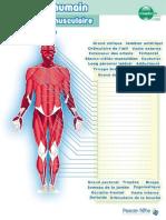 planche_muscles.pdf