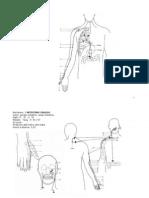 I meridiani del Corpo Umano.doc
