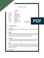 Passiflora foetida L.docx