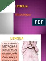 Lengua Histologia