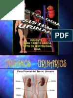 HistologiaRenal