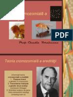 teoria cromozomiala a ereditatii.ppt