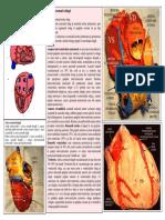 LP 15 VASCULARIZATIA CORDULUI PERICARDUL.pdf