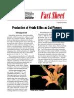 proizvodnja ljiljana u gajbicama.pdf